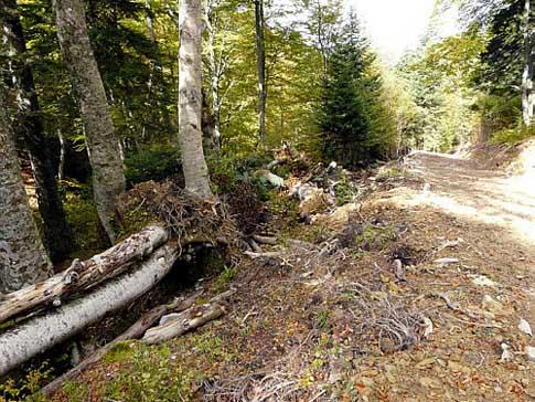 Piste pastorale Pics de Gar et Cagire en zone Natura 2000