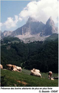 Présence de bovins allaitants de plus en plus forte