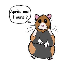 demande d'autorisation d'introduction de Grands hamsters