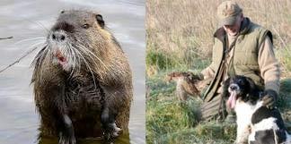 Un chasseur a confondu un autre chasseur avec un ragondin