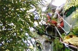 Descente acrobatique d'une palombière