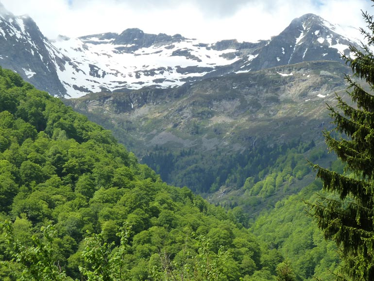 Nature_Pyrenees
