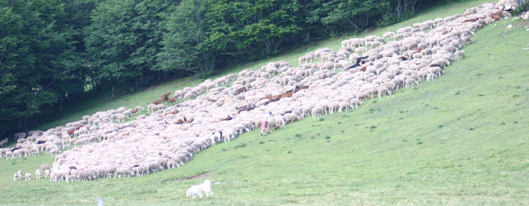 La cohabitation du pastoralisme avec les prédateurs