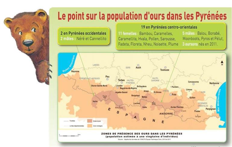 La population d'ours dans les Pyrénées