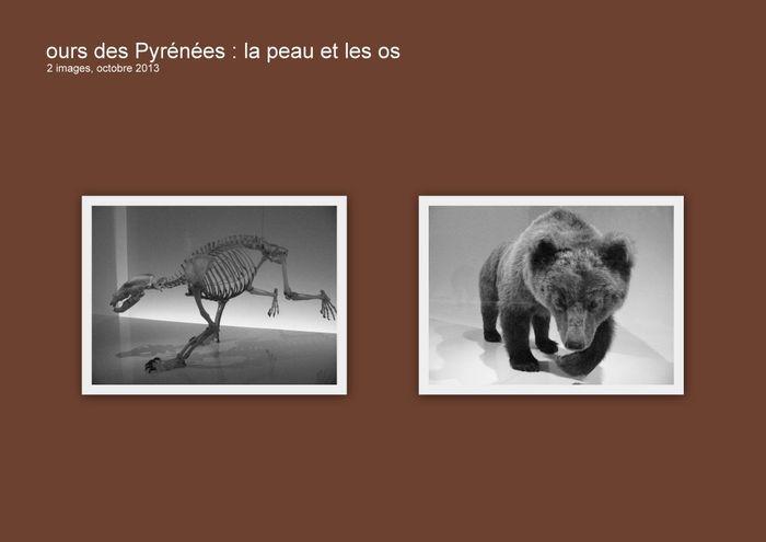 Ours-des-Pyrénées-la-peau-et-les-os-1024x724