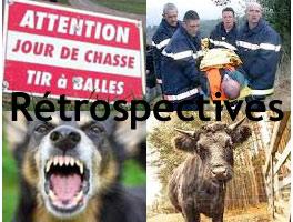 Retrospectives accidents de chasse, attaques de chiens errants etc...