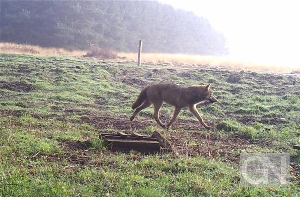 Wolf-Nordhorn range -2014-04-03