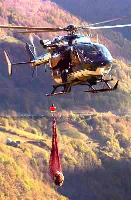 L'ourse Cannelle évacuée en hélicoptère
