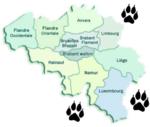 Retour du loup en Belgique