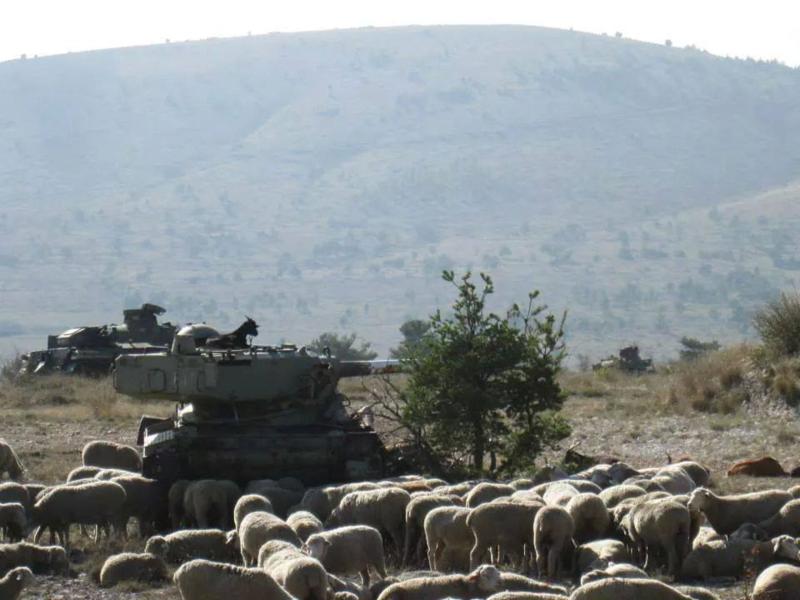 Une chèvre sur la tourelle d'un char dans le camp de Canjuers