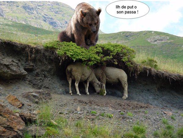 a Papillon, l'ours de Luz-Saint-Sauveur