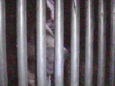 k La cage de l'ours Papillon