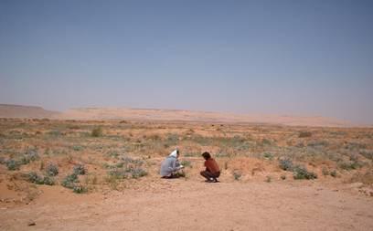 Les nomades de la steppe algérienne